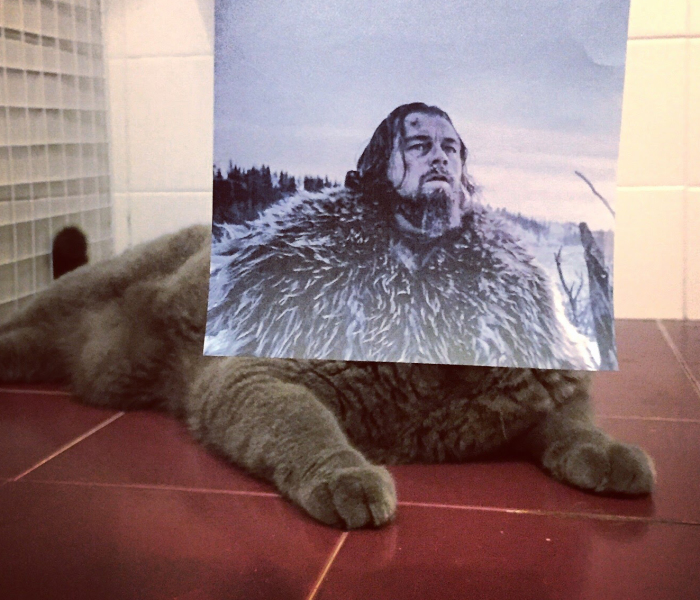 "Photographer Follows Cats Around To ""Insert"" Them Behind Famous Movie Posters, And The Result Is Purrfect"