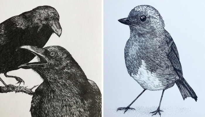 13 Detailed Birds Made With A Single Pen! All Drawn By Bas Geeraets