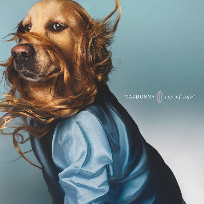 This Dog Recreates Madonna's Iconic Pics And Some Turn Out Even Better Than Originals