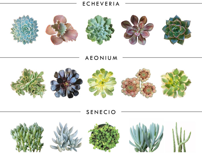 10 Different Genuses Of Succulents