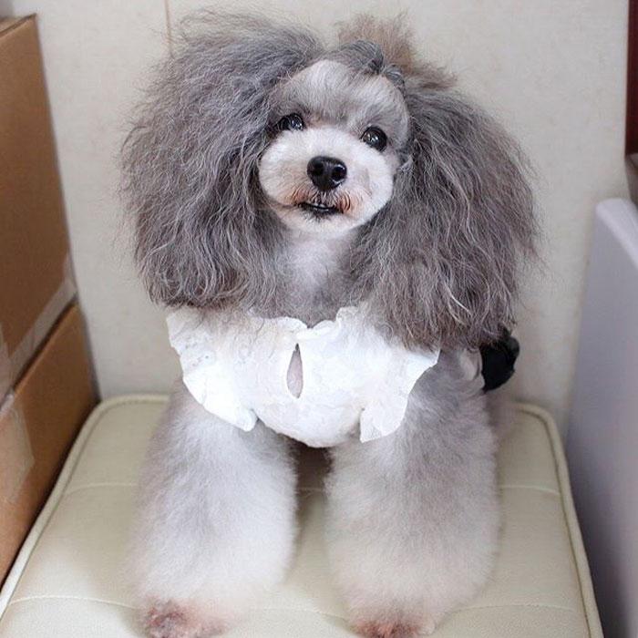 Transfurmations Dog Grooming