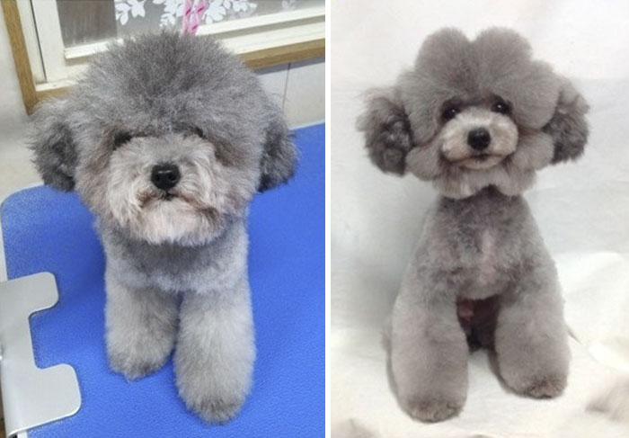 The Way This Japanese Pet Groomer Transforms Dogs Is Going Viral Bored Panda