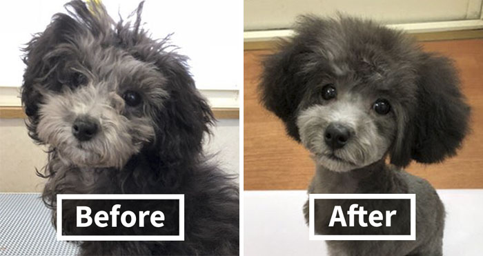 The Way This Japanese Pet Groomer Transforms Dogs Is Going Viral