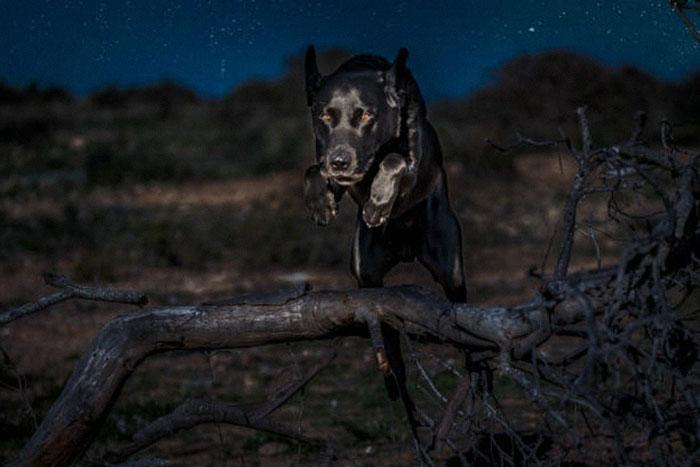 Hundetraining bei Nacht