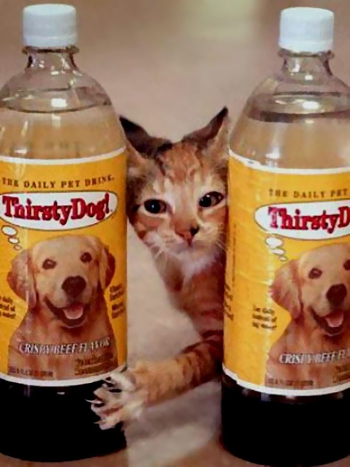 Thirsty Cat! And Thirsty Dog!, 1994