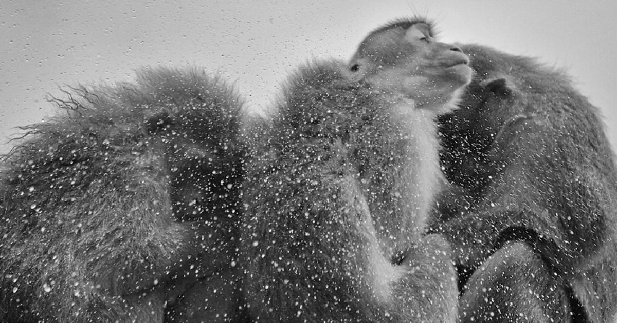 Nature Photographer Captures Wild Animals In Strikingly Dramatic Photos