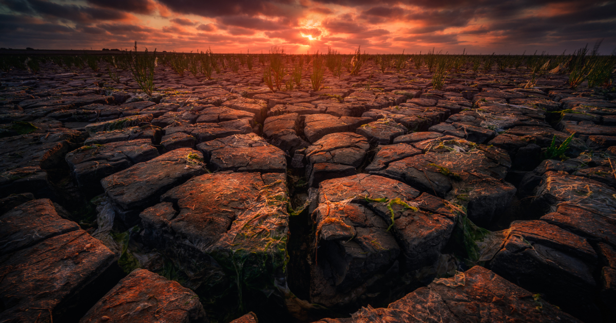 I Captured The Extreme Drought Along The Dutch Coastlines