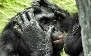 Esta empleada de un zoo revela los 10+ datos más interesantes sobre animales que ha aprendido en su trabajo