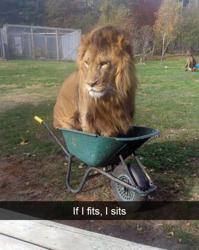 Image of: Funny Memes Animal Snaps Bored Panda 271 Funny Animal Snapchats That Will Leave You With The Biggest