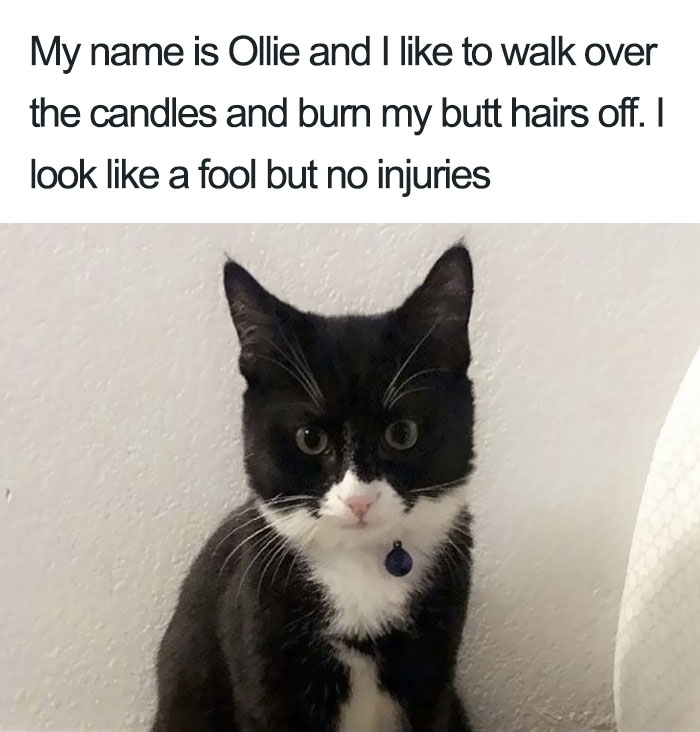 Funny-Cat-Shaming