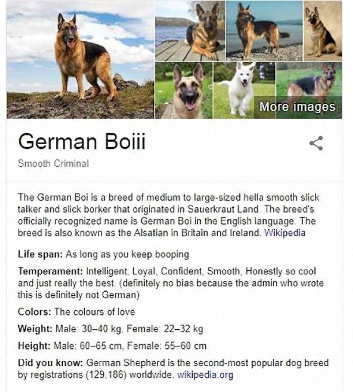 Its Magazine Someone Is Creating Fake Dog Breed Wikipedia