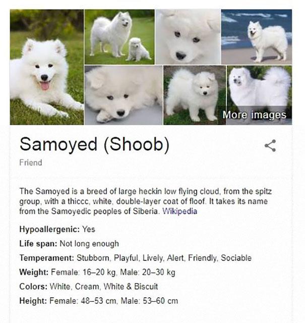 Funny Dog Breed Descriptions