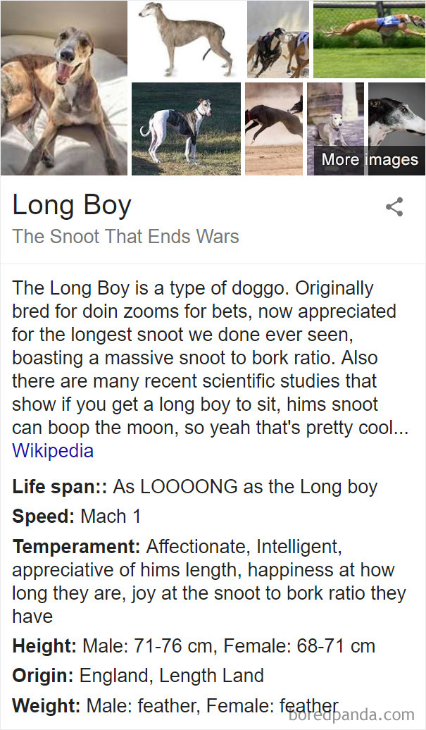 Long Boy