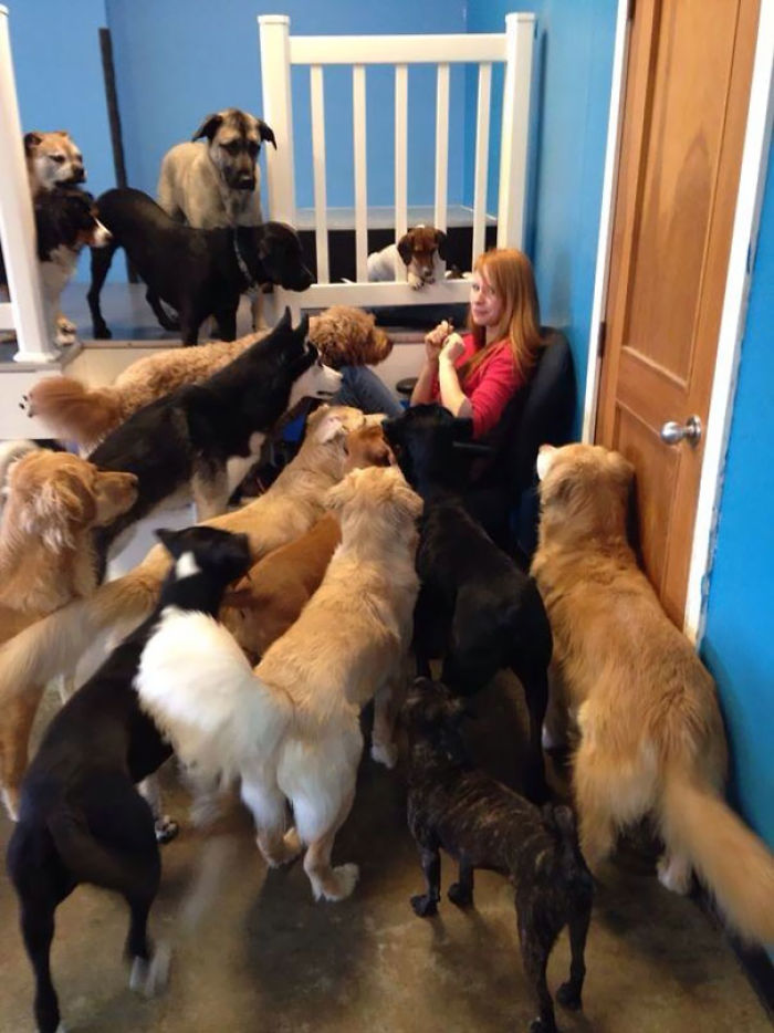 This Is What Happens When You Try To Eat Beef Jerky In A Dog Daycare