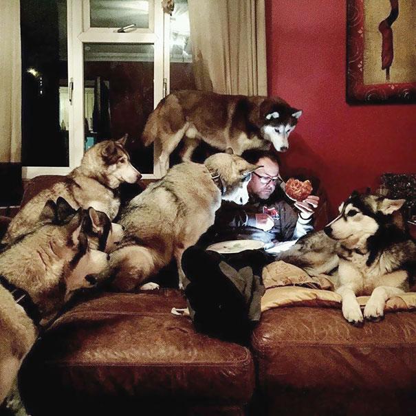 Yemek Görünce Gözü Dönen Köpekler (Foto Galeri), hangisi en iyi?
