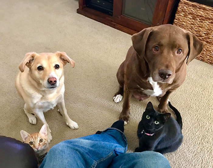 Every Time I Try To Eat In Peace, The Famished Four Make An Appearance