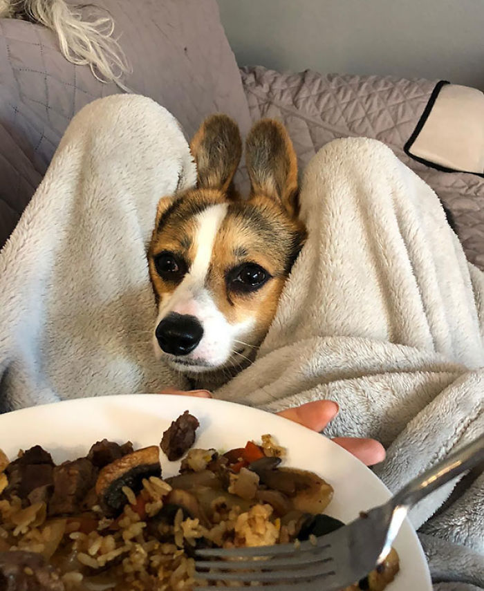 Please Mom, Can I Have Some Of Your Food?