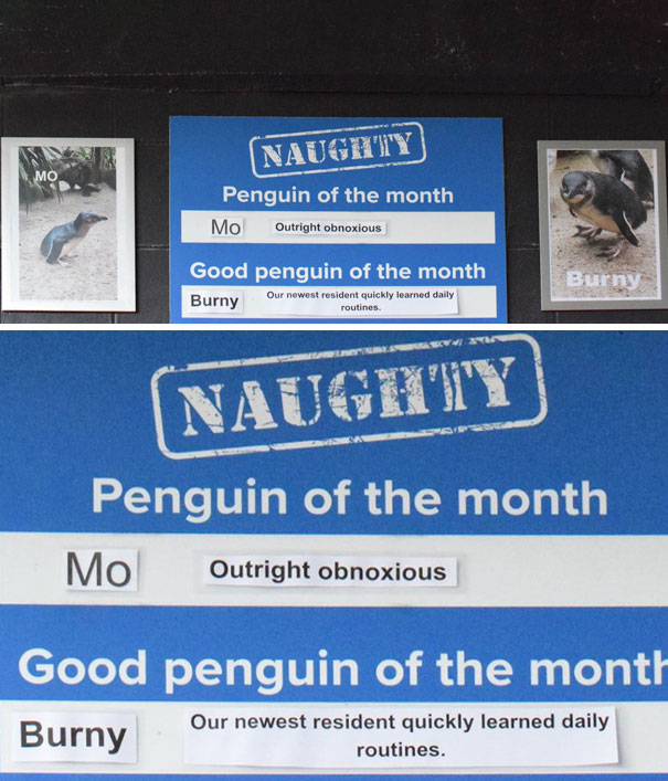 Funny-Penguin-Shaming-National-Aquarium-New Zealand