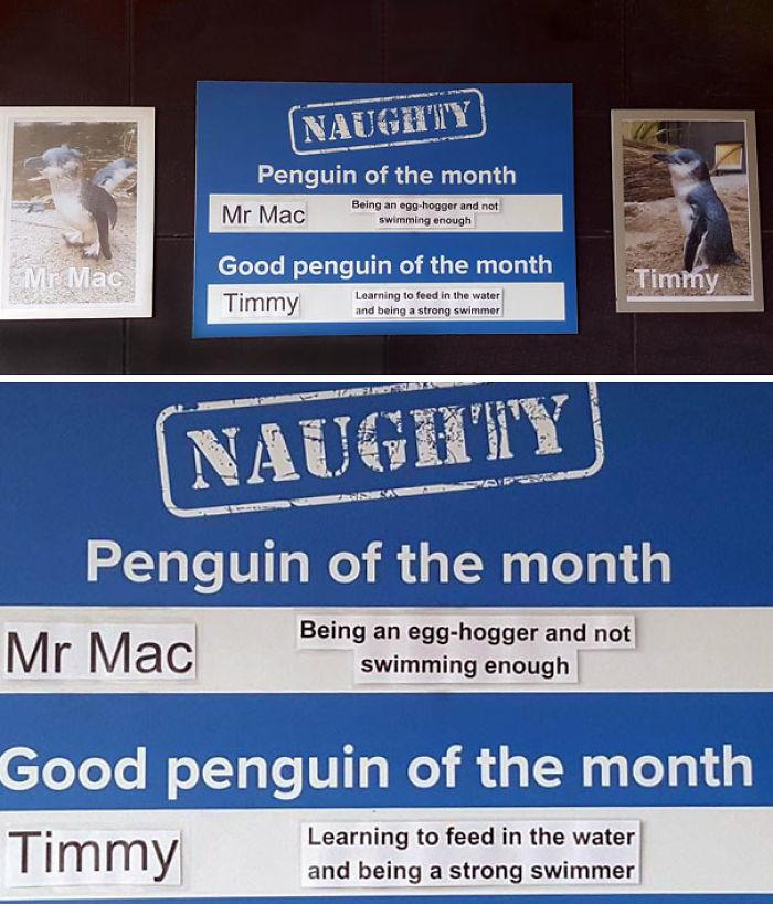 Funny-Penguin-Shaming-National-Aquarium-New Zealand