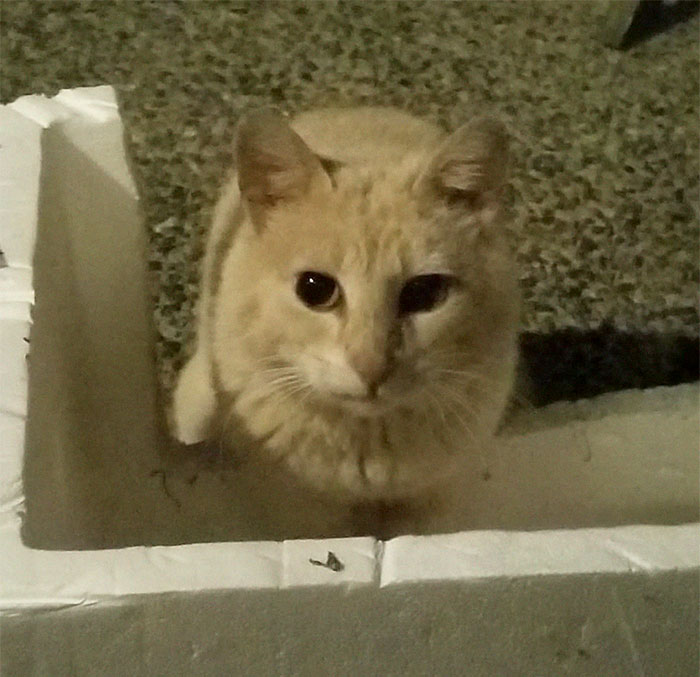 house-moving-free-feral-cat-mirandae-33