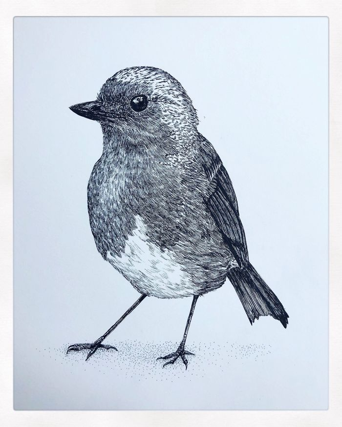 13 Detailed Birds Made With A Single Pen All Drawn By Bas