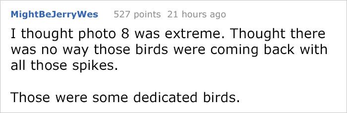 Guy Tries To Fight Against Birds For 4 Years, And It Gets Funnier With Every Pic