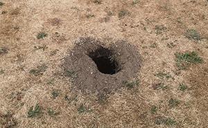 Pidió ayuda en internet para identificar un agujero que apareció en su jardín, y ahora seguro que desearía no haberlo hecho