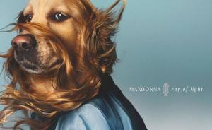 This Dog Recreated Madonna's Iconic Photos, And The Attention To Detail Is Unbelievable