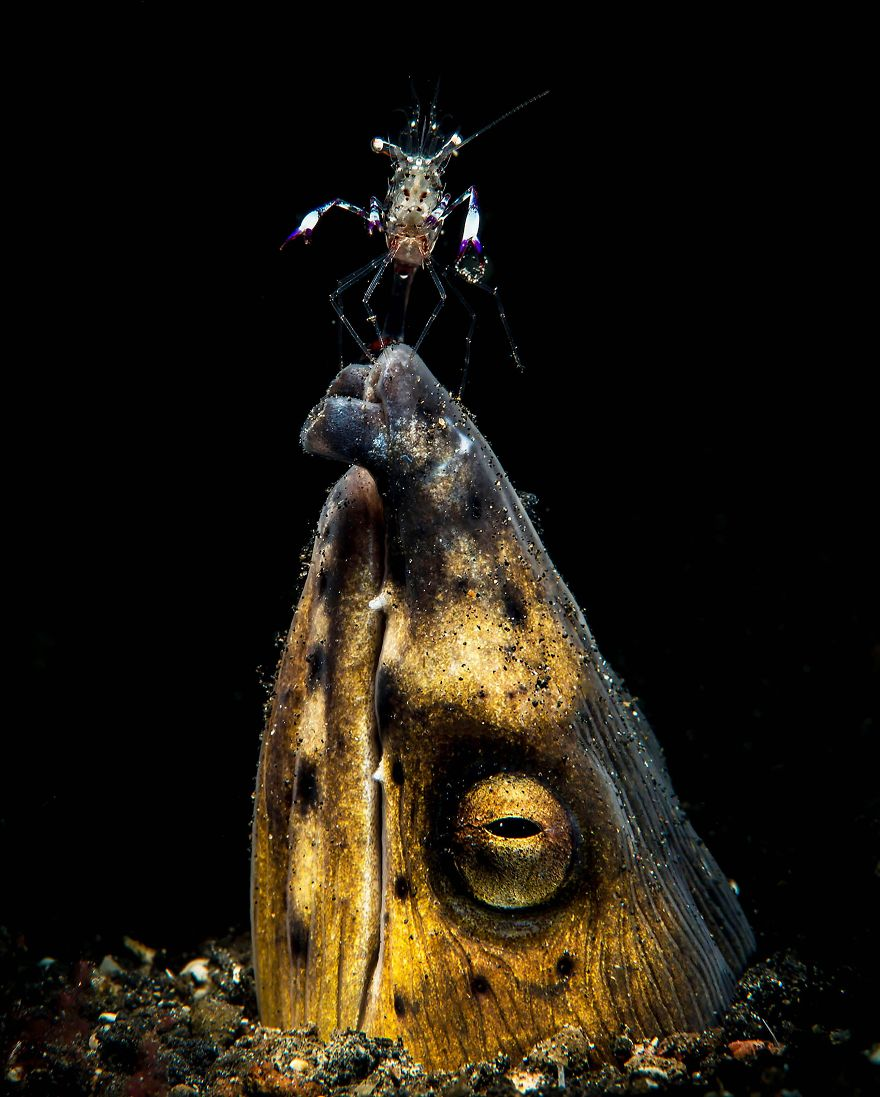 "Macro Category: ""Black-Saddle Snake Eel"" By Marchione Dott. Giacomo, Italy"