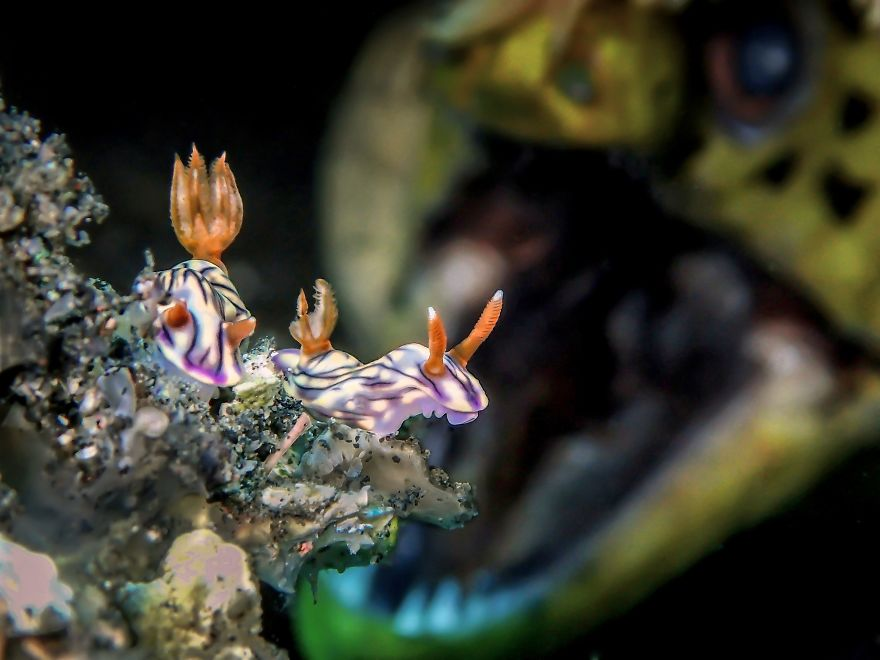 """Up & Coming Underwater Photographer Of The Year. """"Roar"""" By Man Bd, Malaysia"""