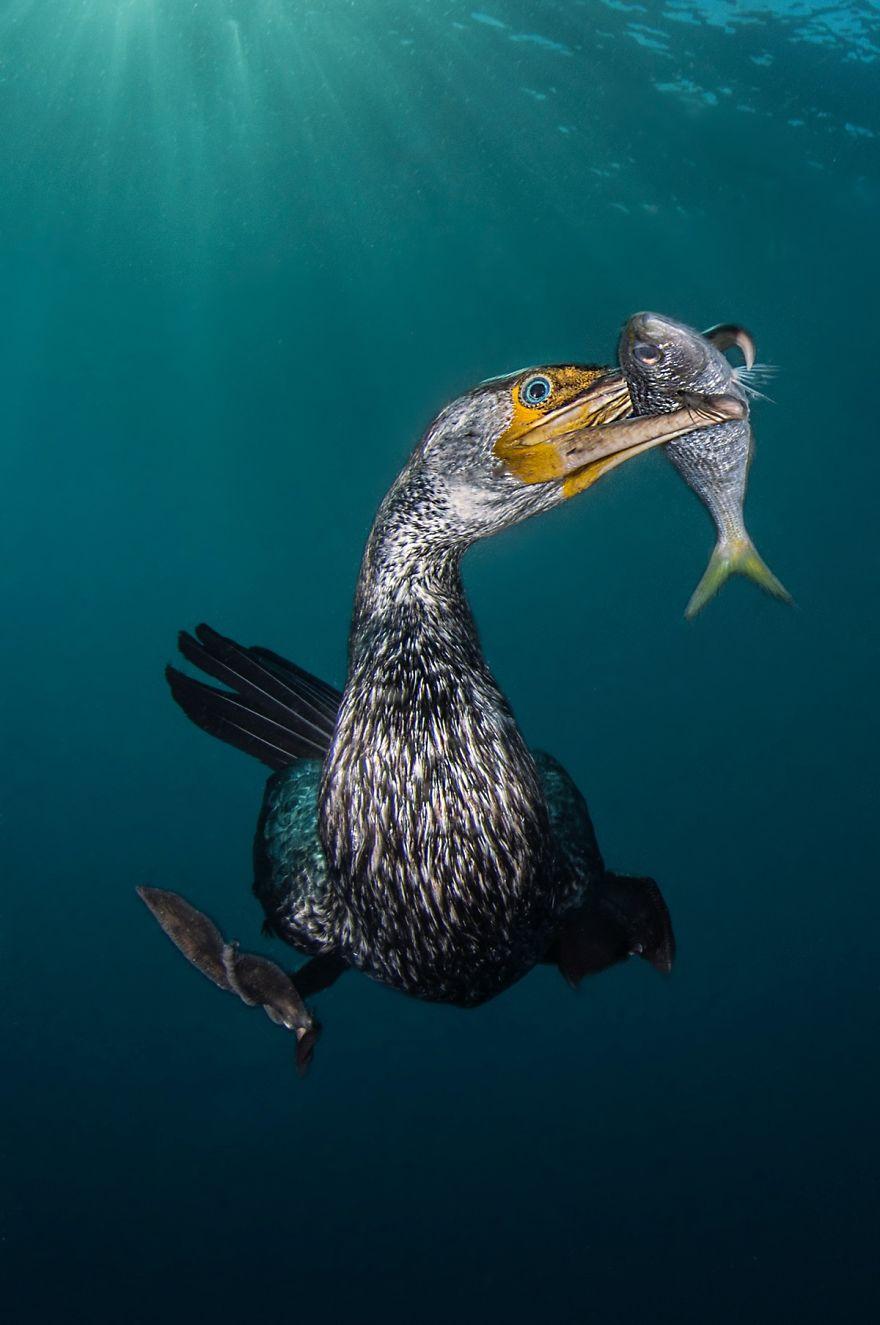 "Behaviour Category: ""The Fisherman"" By Filippo Borghi, Italy"