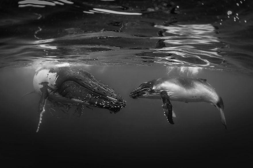 "Black & White Category: ""The Talk"" By Rodney Bursiel USA"