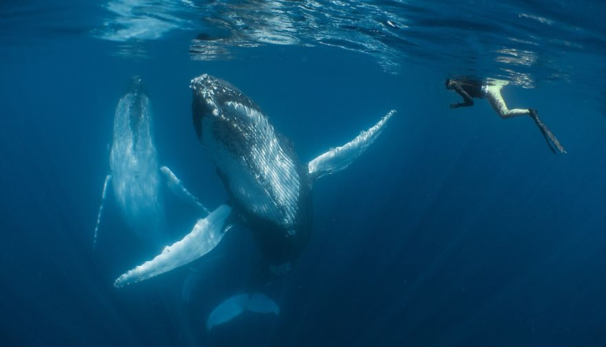 """Compact Category Winner: """"Dancing With The Giants"""" By Simone Matucci, New Zealand"""