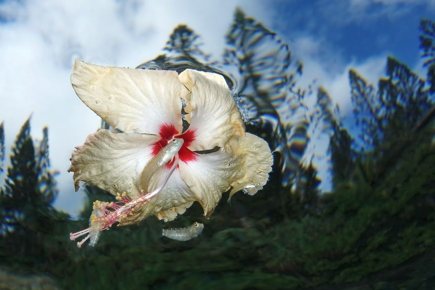 """Compact Category Runner Up: """"Flower Power"""" By Jack Berthomier, New Caledonia"""