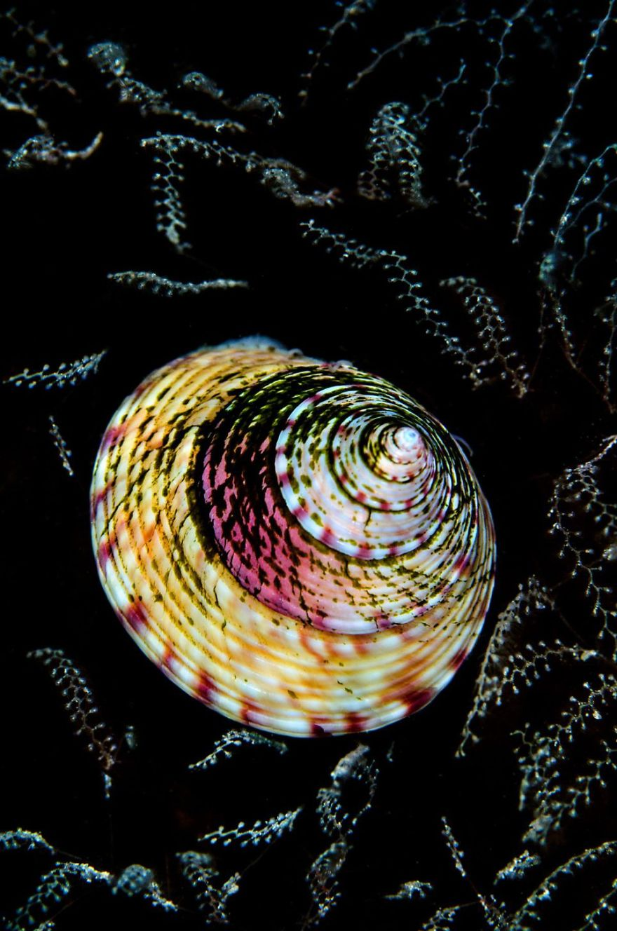 """British Waters Macro Category: Runner Up """"Topshell Tapestry"""" By Cathy Lewis, UK"""