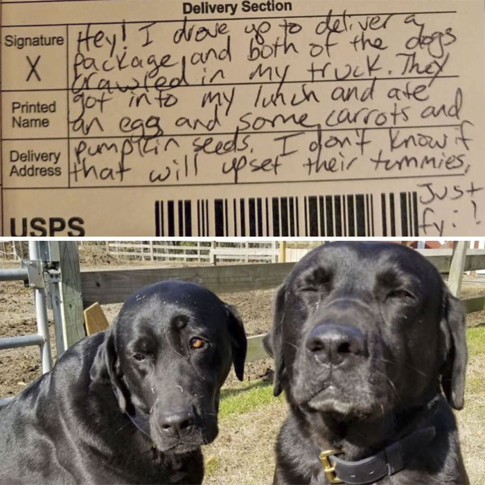 Two Naughty Boys Stole The Postman's Lunch