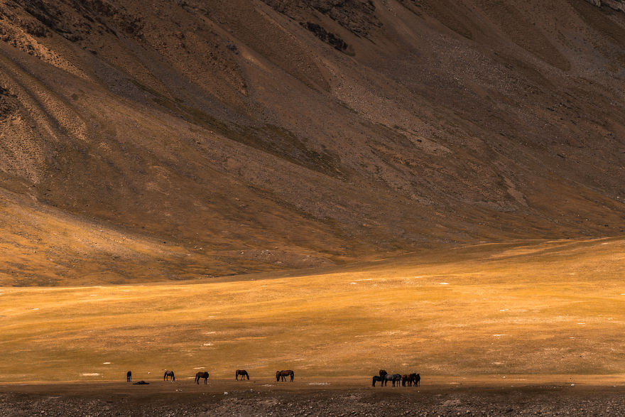 Horses In A Valley Standing Against The High Mountains