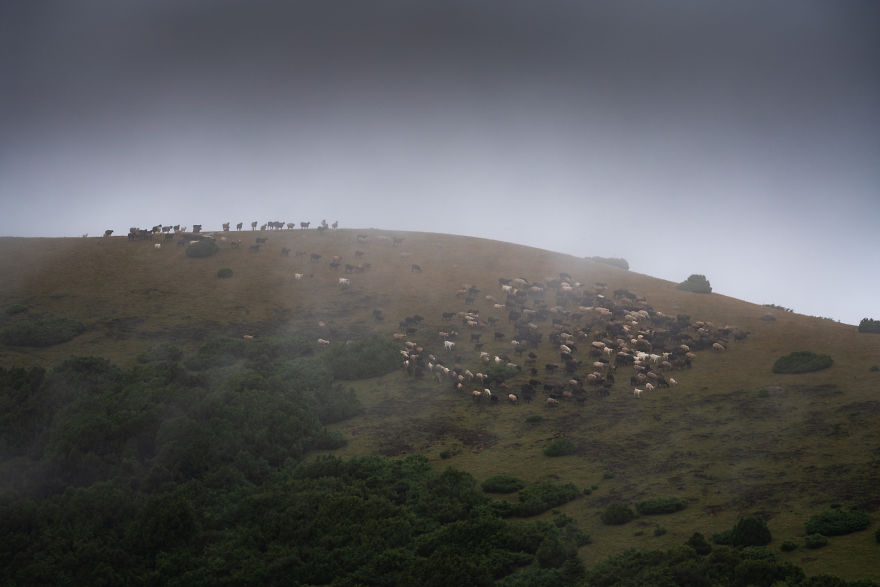 Hundreds Of Sheep Moved On The Hills Right Before A Storm Hit