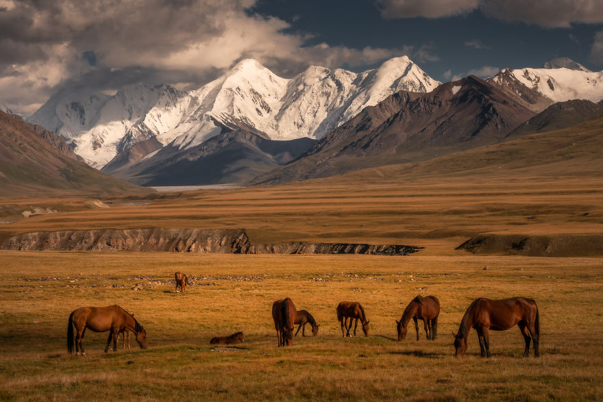 Wild Horses Standing In Front Of The Huge Snow Capped Peaks In The Sary-Jaz Valley On The Border Of Kyrgyzstan And China