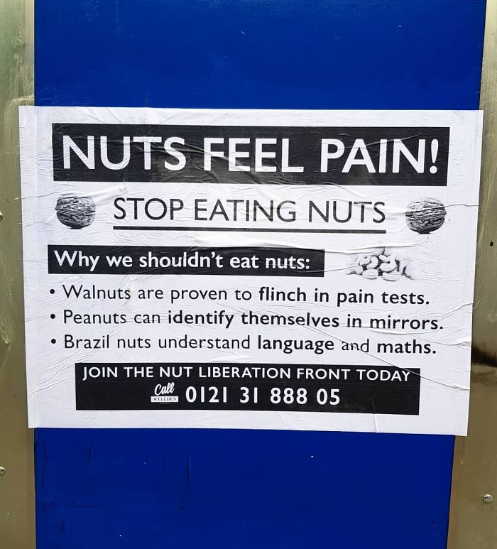 Nuts Feel Pain!