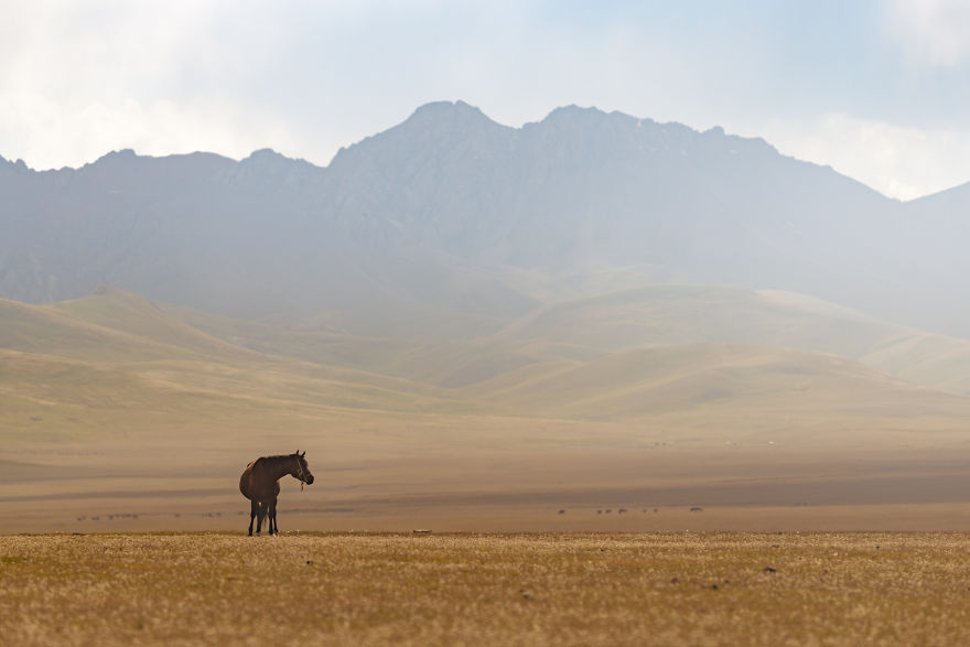 A Horse With A Mountain Backdrop In The Song-Kul Area (3000m)