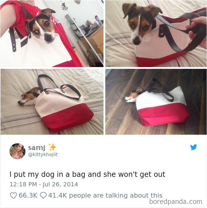 Hilarious-Dog-Tweets