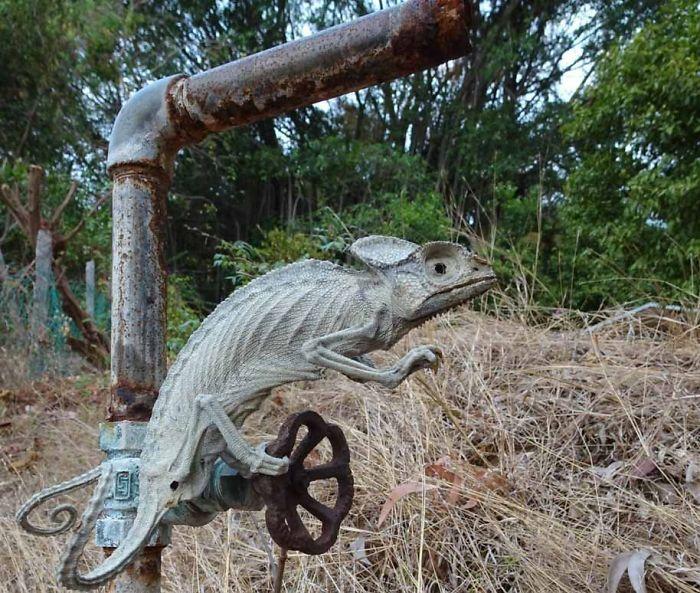 Camaleón momificado vivo por el sol tropical