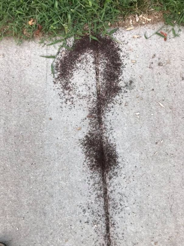 These Ants Forming A Question Mark