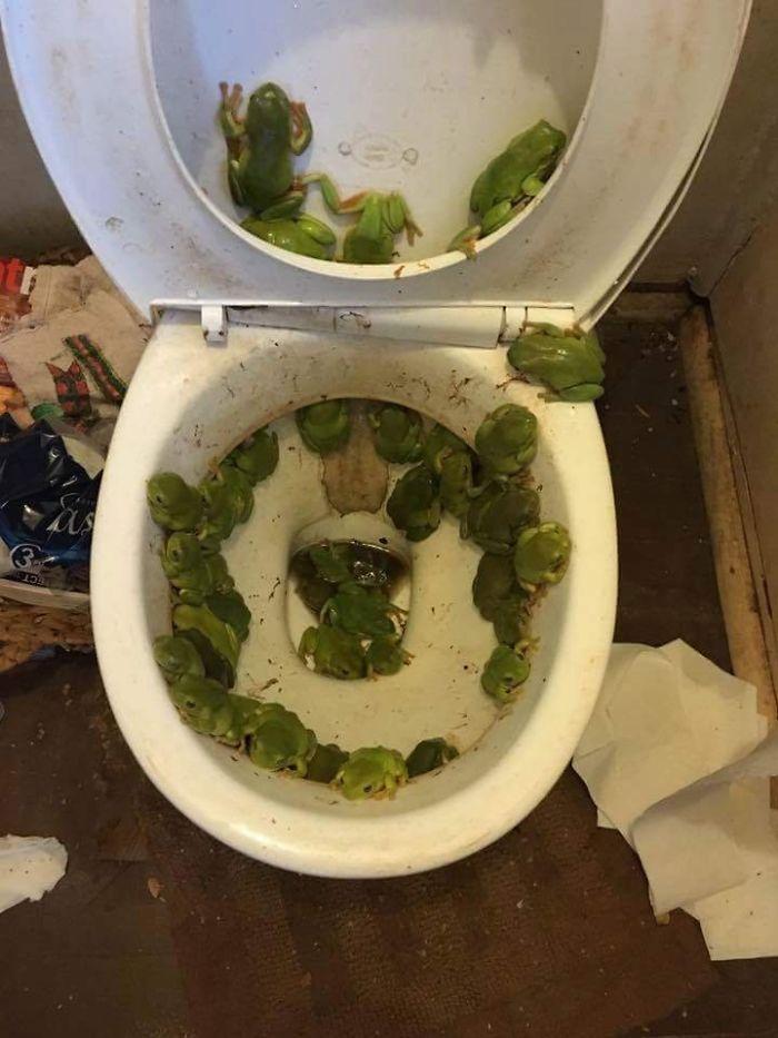My Mum's Toilet After A Recent Flood