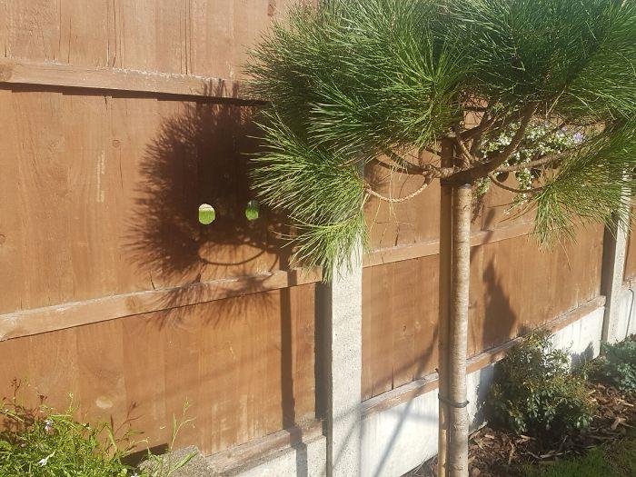 My Mum's New Tree Has A Happy Shadow