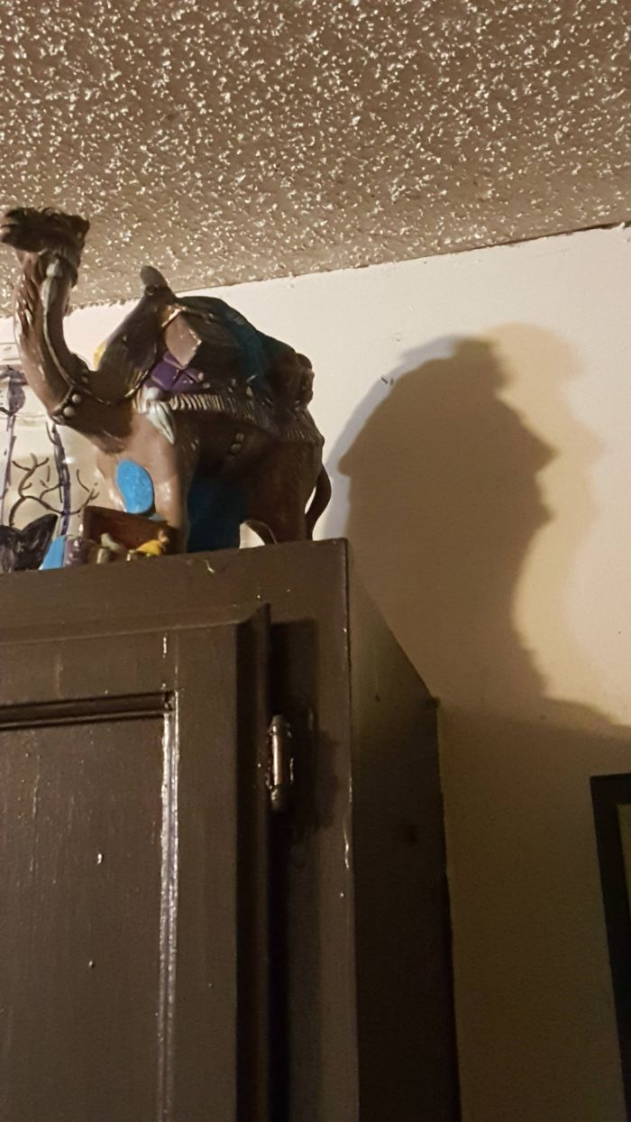 The Shadow From This Camel Statue In My Apartment Looks Like A Bust