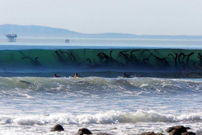 Algas gigantes en las olas