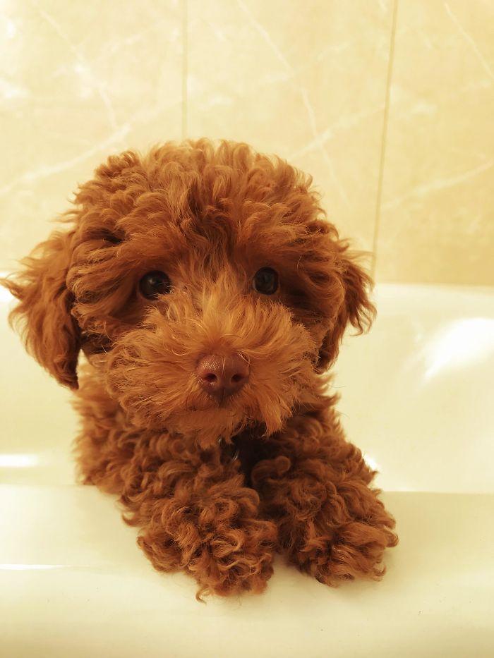 Mi primer cachorro