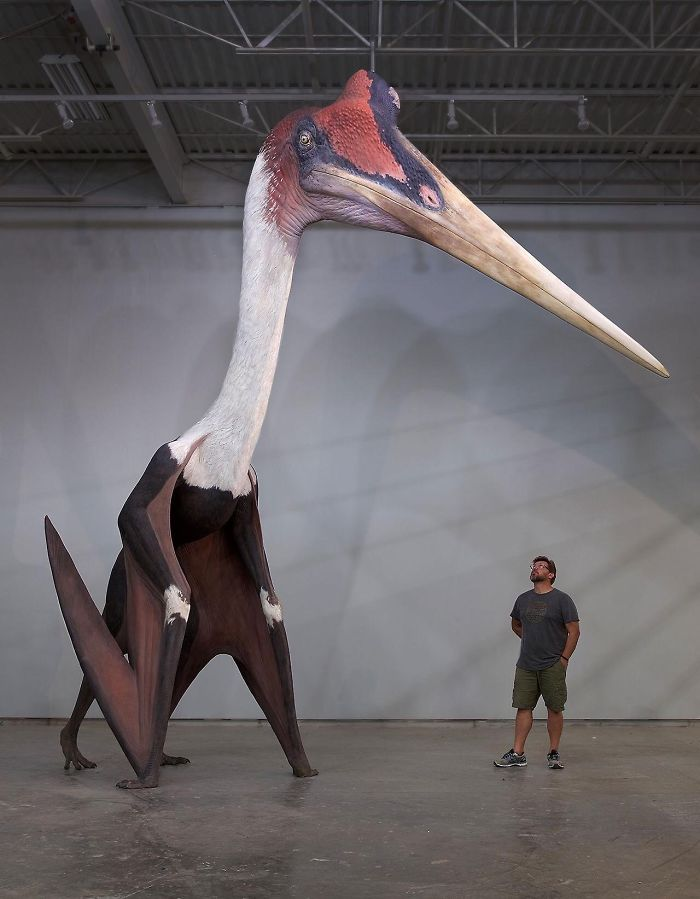 Quetzalcoatlus Northropi Model Next To A 18m Man The Largest                                                           Known Flying                                                           Animal Ever                                                           Exist